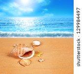 Shell On The Sandy Beach