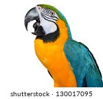 beautiful isolated parrot.... | Shutterstock . vector #130017095