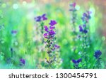 close up shot of the beautiful... | Shutterstock . vector #1300454791