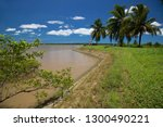 Mangrove And Palm Trees On The...