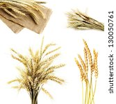 wheat isolated on white | Shutterstock . vector #130050761
