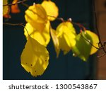 yellow green autumn leaves on a ... | Shutterstock . vector #1300543867