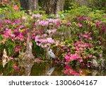 bird in beautiful garden.... | Shutterstock . vector #1300604167