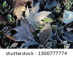 miscellaneous close up tree... | Shutterstock . vector #1300777774