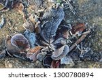 miscellaneous leaves twigs with ... | Shutterstock . vector #1300780894