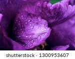 floral natural background from... | Shutterstock . vector #1300953607
