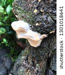 fungi on tree | Shutterstock . vector #1301018641