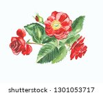 watercolor red dog rose on... | Shutterstock . vector #1301053717