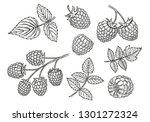 raspberry vector drawing set.... | Shutterstock .eps vector #1301272324