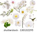 Stock photo set of light flowers isolated on white background 130132295