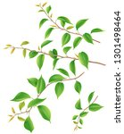 tree branches set with green...   Shutterstock .eps vector #1301498464