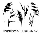 Reed Hand Drawn Sketch Vector...