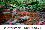 beautiful rainforest with green ... | Shutterstock . vector #1301805874