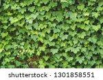 Green Maple Leaf Cascading Dow...