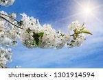 spring flowers. beautifully... | Shutterstock . vector #1301914594