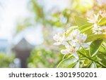 fresh flowers. spring... | Shutterstock . vector #1301950201