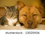 Stock photo cat and dog resting together on bed 13020436