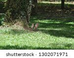 the tree with the feet | Shutterstock . vector #1302071971