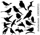 Stock vector bird vector 130230911