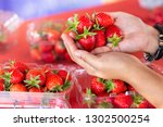 fresh strawberry on hand. | Shutterstock . vector #1302500254