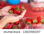 fresh strawberry on hand. | Shutterstock . vector #1302500257
