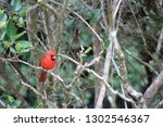 red male northern cardinal... | Shutterstock . vector #1302546367