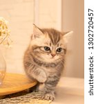 Stock photo scottish fold kitten young dray kitten sitting with white flowers a glass vase and a wooden plate 1302720457