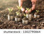 the seedlings are growing on... | Shutterstock . vector #1302790864