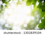 closeup nature view of green... | Shutterstock . vector #1302839104
