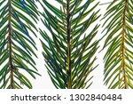 fir branch on white background... | Shutterstock . vector #1302840484