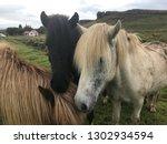 unique icelandic horse breed in ... | Shutterstock . vector #1302934594