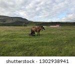 unique icelandic horse breed in ... | Shutterstock . vector #1302938941