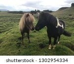 two unique icelandic horse... | Shutterstock . vector #1302954334