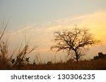 Dead Tree In Country Field