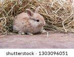 small rabbits newborn have set... | Shutterstock . vector #1303096051