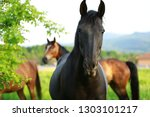 Black Horse Portrait With Othe...