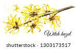 blossoming branch of a witch... | Shutterstock . vector #1303173517