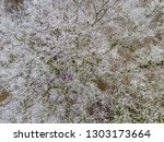 aerial view of trees covered... | Shutterstock . vector #1303173664