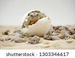 Stock photo cute portrait of baby tortoise hatching birth of new life closeup of a small newborn tortoise 1303346617