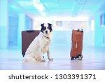 border collie guards suitcases...   Shutterstock . vector #1303391371