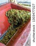 traditional winemaking in... | Shutterstock . vector #1303477327