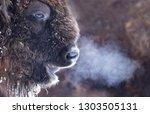 Close Up Portrait Of A Wild...