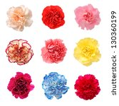 Nine Colorful Carnation...