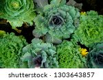colorful cabbage decorated in... | Shutterstock . vector #1303643857