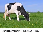 cow on a summer pasture | Shutterstock . vector #1303658407