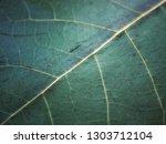 Green Leaf. Leaves Background....