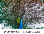 elegant peacock with colored... | Shutterstock . vector #1303906681