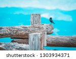 free black bird perched on a... | Shutterstock . vector #1303934371