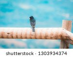 free black bird perched on a... | Shutterstock . vector #1303934374