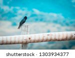 free black bird perched on a... | Shutterstock . vector #1303934377